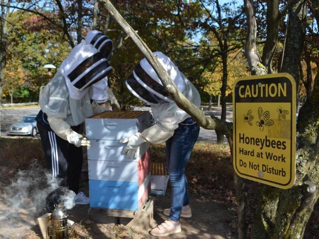 Lehigh beekeeping club