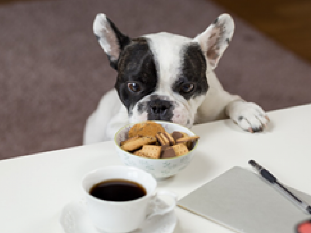 puppy and cookies
