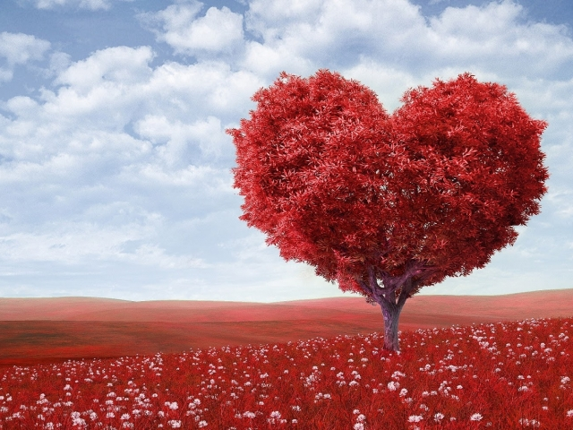 photo of heart shaped tree in a field