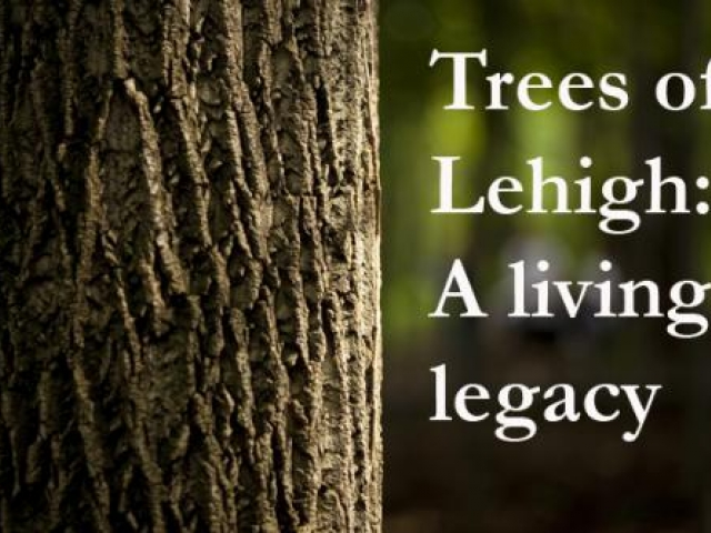 """Tree trunk with text """"Trees of Lehigh: A living legacy"""" on the right side of the image"""