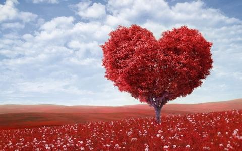 photo of heart shaped tree in a field