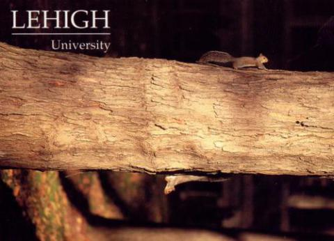 Lehigh postcard featuring two squirrels on a tree trunk