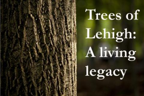 "Tree trunk with text ""Trees of Lehigh: A living legacy"" on the right side of the image"